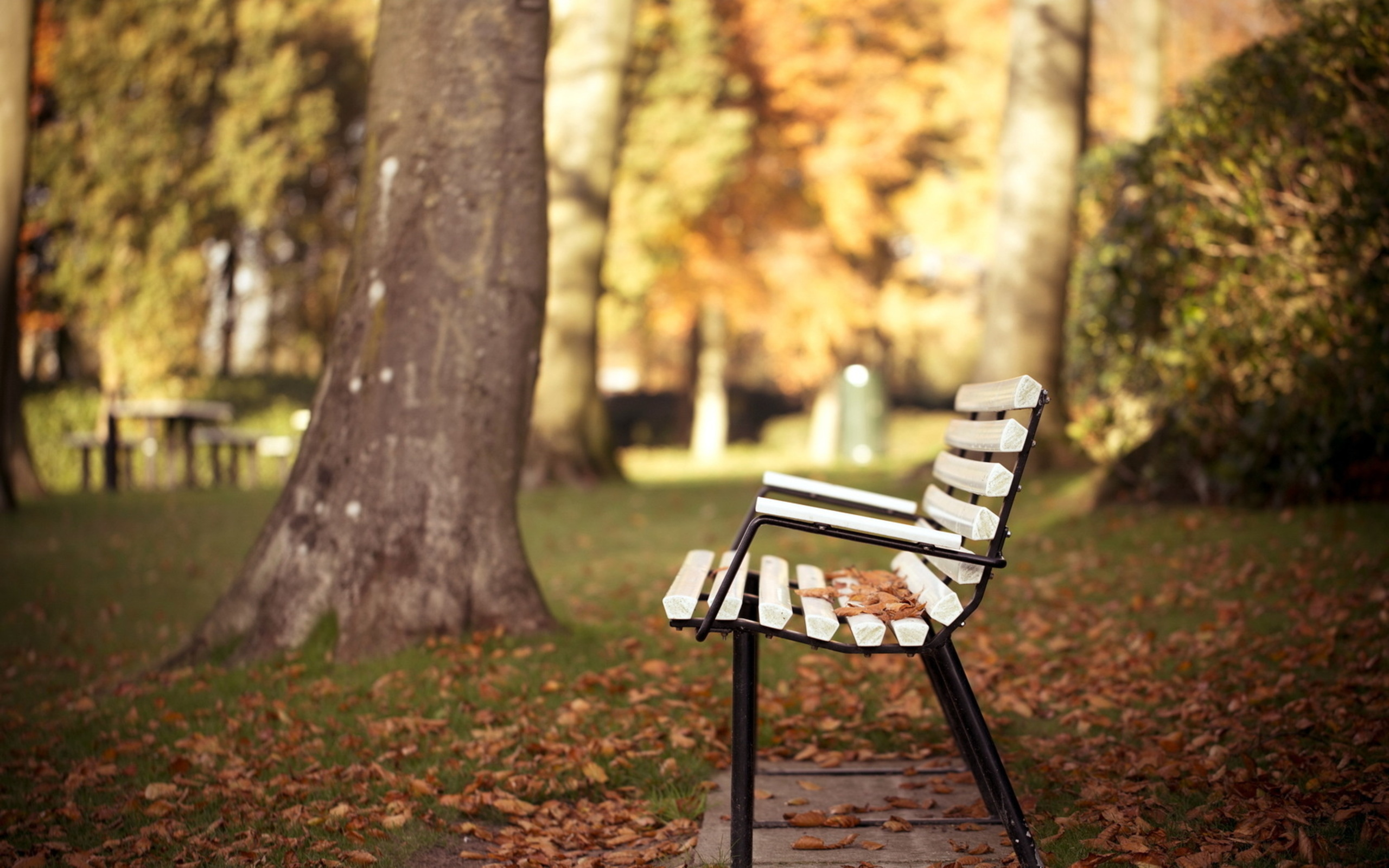Park bench - A setting for joy